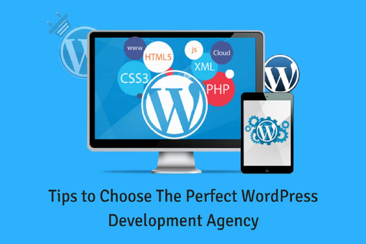 5 Tips to Choose The Perfect WordPress Development Agency for Your Business Website