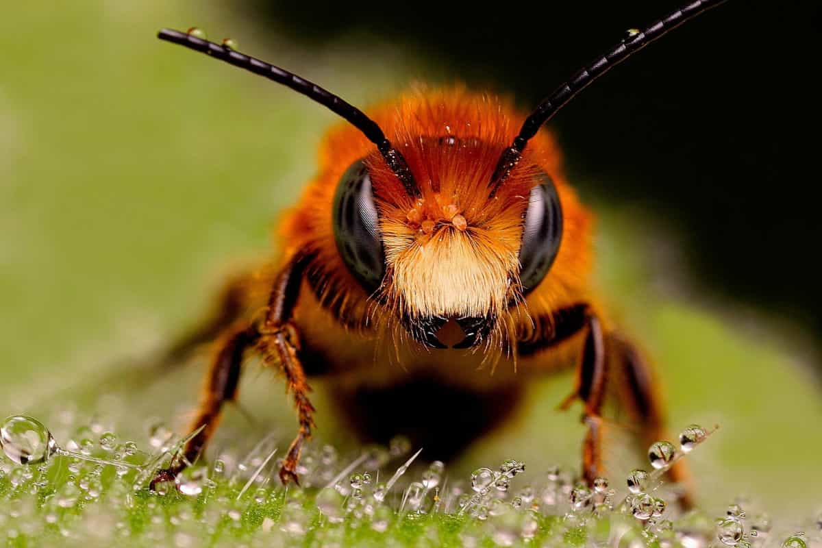 10 Reasons You Should Protect the Honeybee