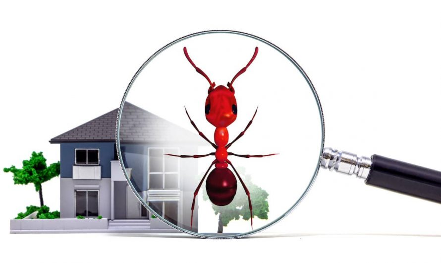 Anti Termite Treatment From Pest Inspection Is Not Better But Best